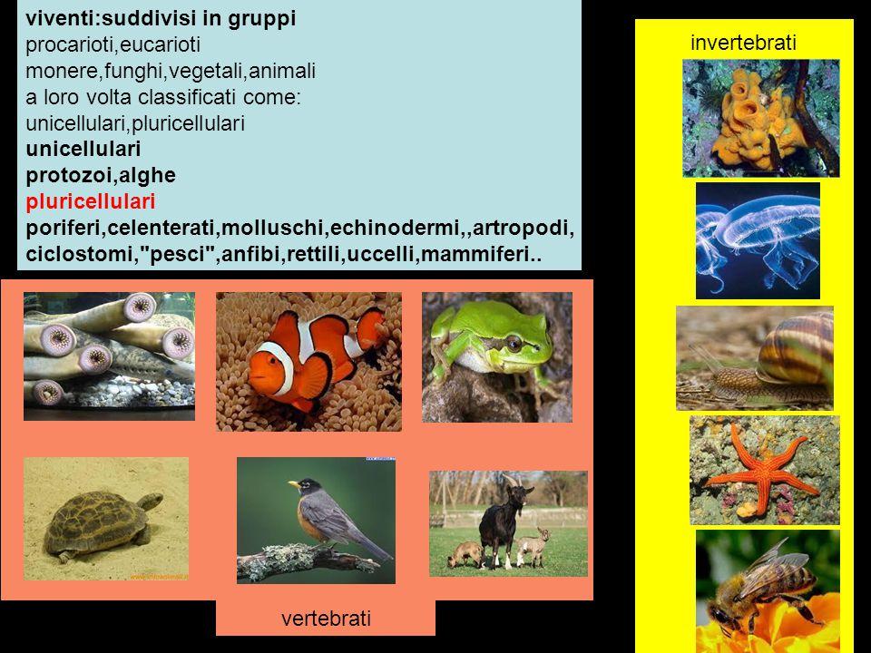viventi:suddivisi in gruppi procarioti,eucarioti monere,funghi,vegetali,animali a loro volta classificati come: unicellulari,pluricellulari unicellula