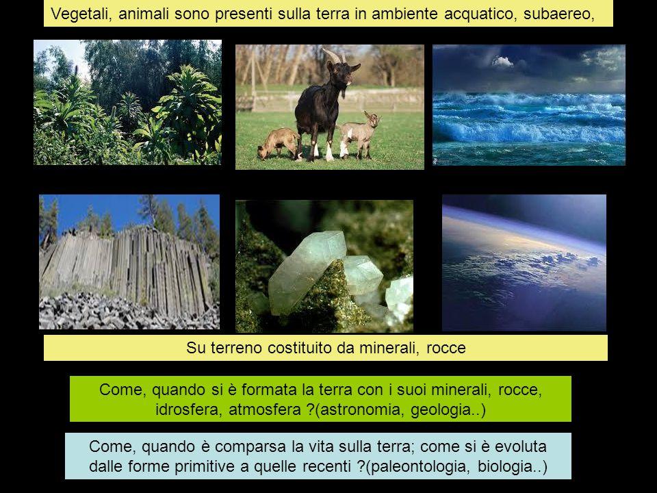 Vegetali, animali sono presenti sulla terra in ambiente acquatico, subaereo, Su terreno costituito da minerali, rocce Come, quando si è formata la ter