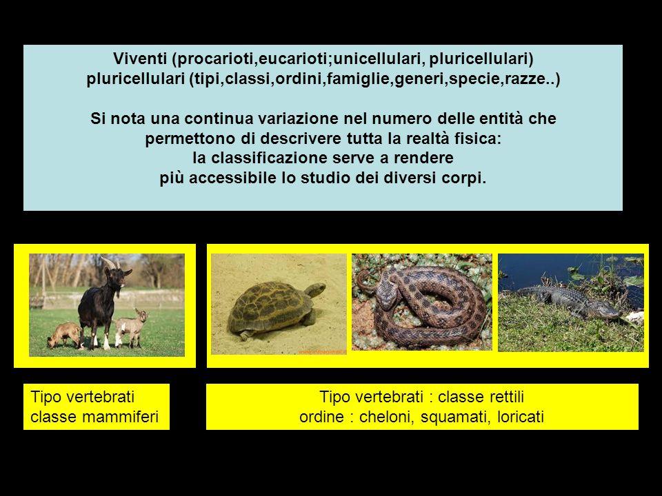 Viventi (procarioti,eucarioti;unicellulari, pluricellulari) pluricellulari (tipi,classi,ordini,famiglie,generi,specie,razze..) Si nota una continua va