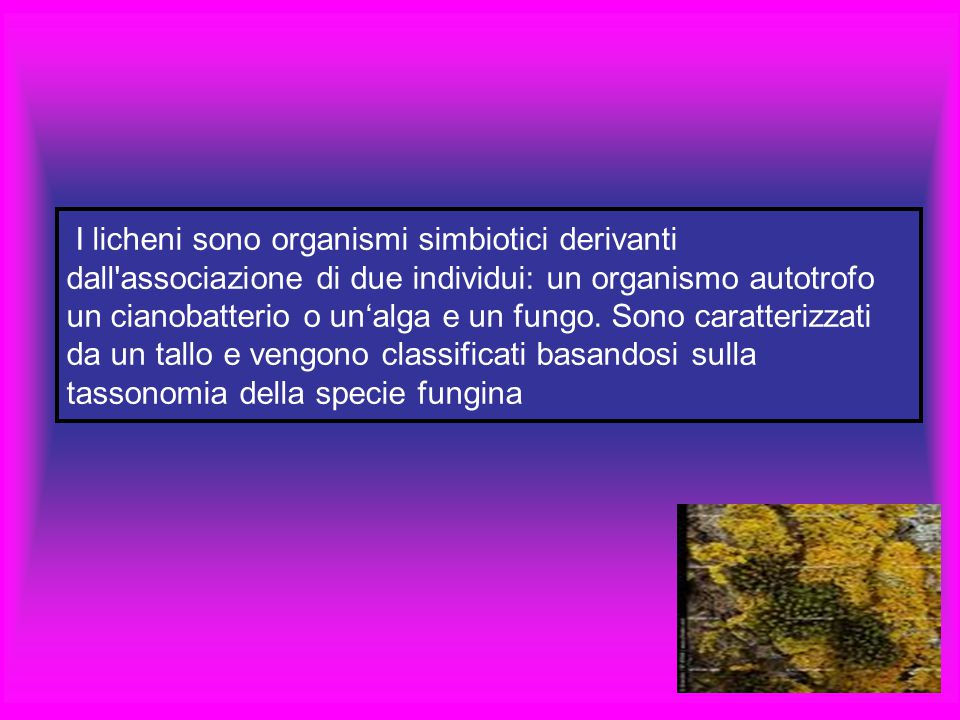 I licheni sono organismi simbiotici derivanti dall'associazione di due individui: un organismo autotrofo un cianobatterio o un'alga e un fungo. Sono c