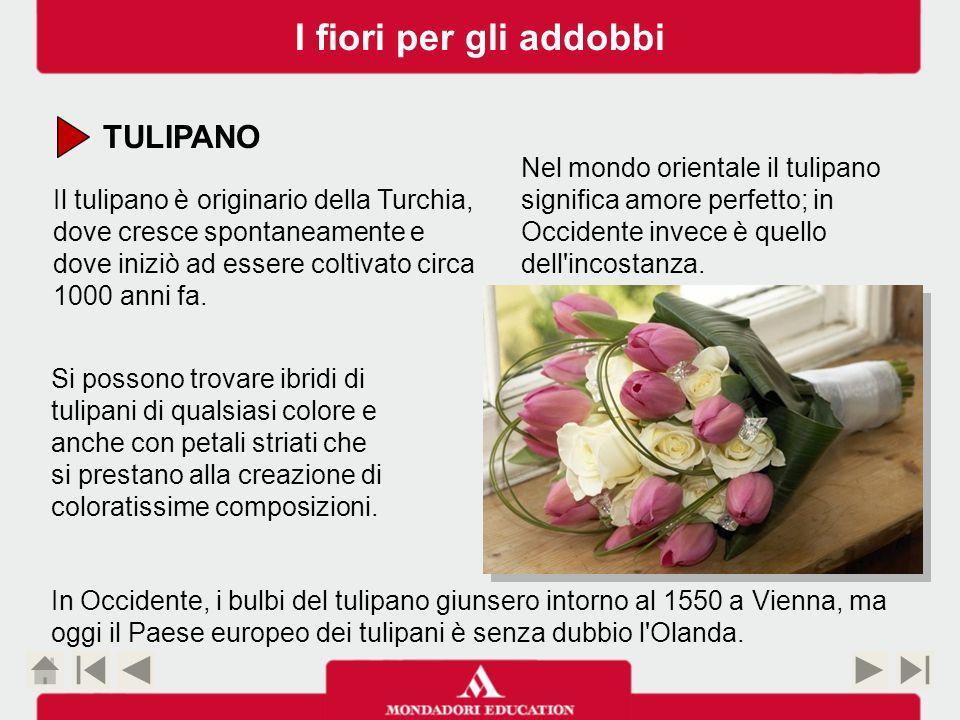 TULIPANO Il tulipano è originario della Turchia, dove cresce spontaneamente e dove iniziò ad essere coltivato circa 1000 anni fa.