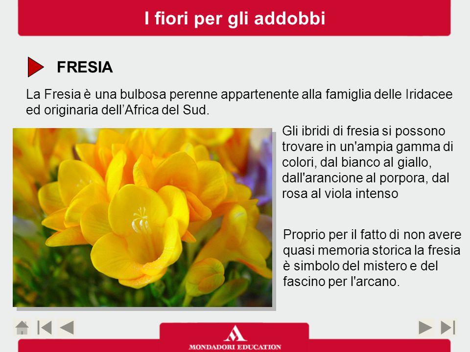 FRESIA La Fresia è una bulbosa perenne appartenente alla famiglia delle Iridacee ed originaria dell'Africa del Sud.