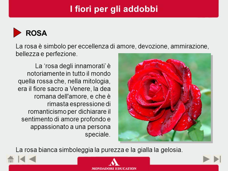 ROSA La rosa è simbolo per eccellenza di amore, devozione, ammirazione, bellezza e perfezione.