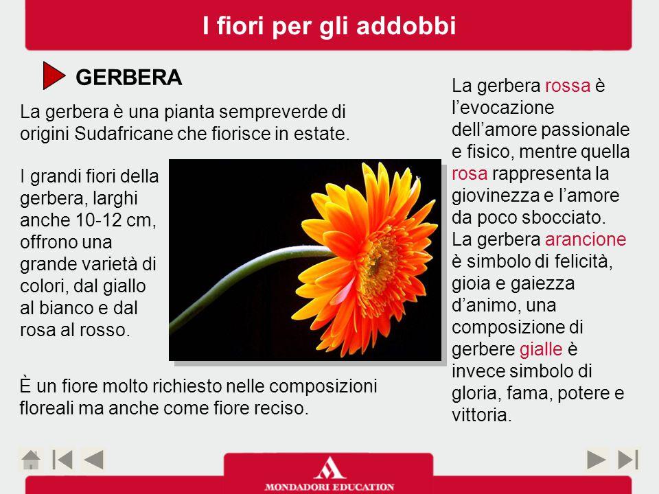 GERBERA La gerbera è una pianta sempreverde di origini Sudafricane che fiorisce in estate.