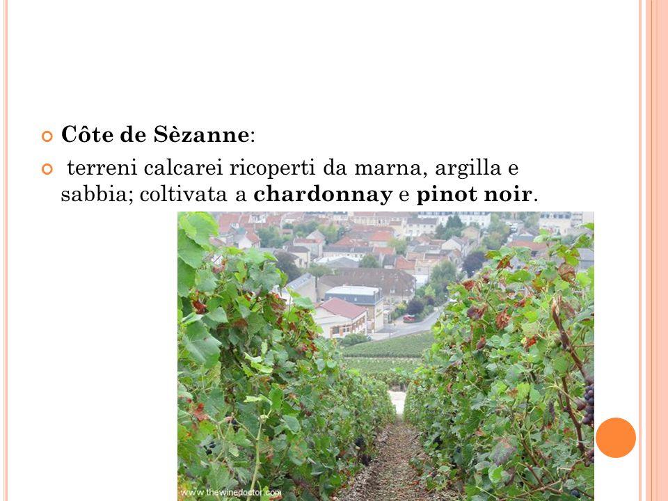 Côte de Sèzanne : terreni calcarei ricoperti da marna, argilla e sabbia; coltivata a chardonnay e pinot noir.