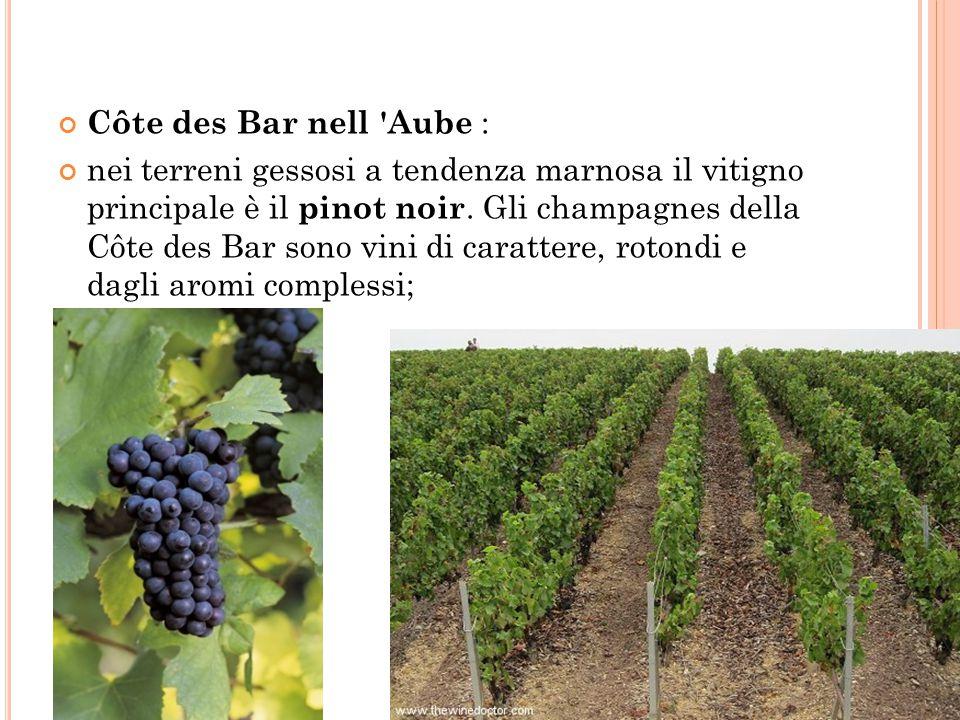 Côte des Bar nell 'Aube : nei terreni gessosi a tendenza marnosa il vitigno principale è il pinot noir. Gli champagnes della Côte des Bar sono vini di