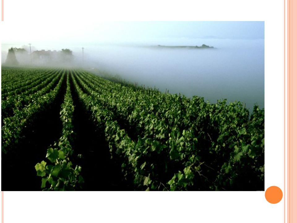 Lo Champagne è un vino spumante famoso in tutto il mondo e comunemente associato ai concetti di lusso e festa; prende il nome dalla regione della Champagne, situata nel nord-est della Francia.