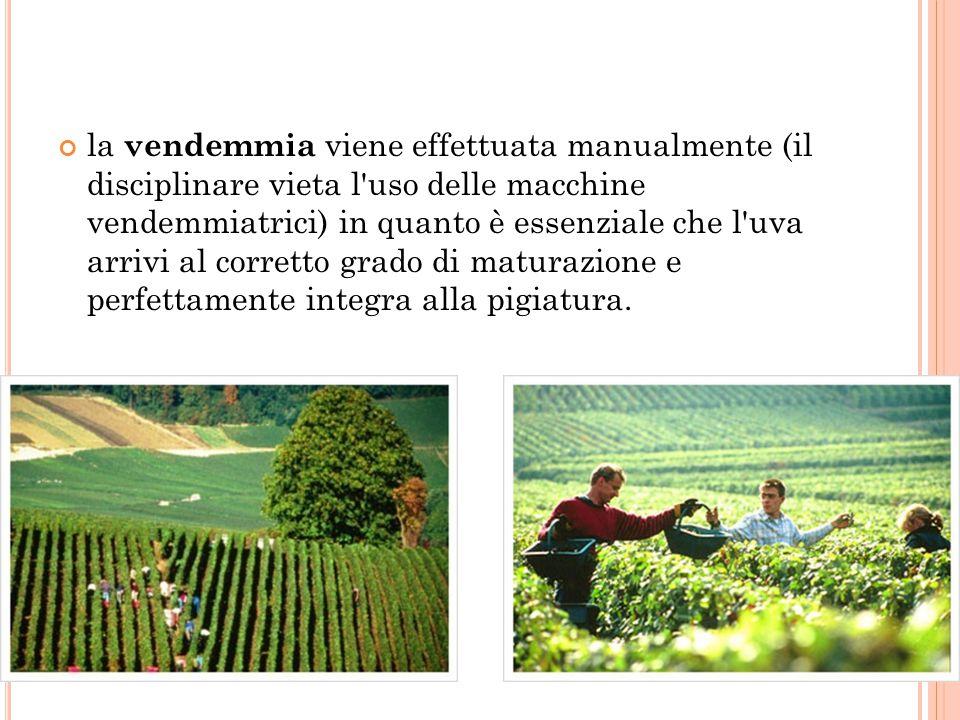 quasi sempre viene effettuato l assemblaggio tra vini di provenienza e di millesimi (annate) differenti, al fine di assicurare una continuità delle caratteristiche qualitative ed organolettiche.