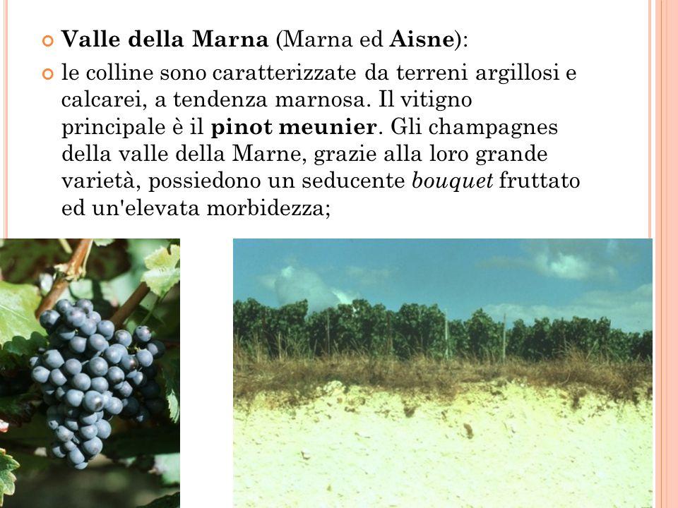 Côte des blancs (Marna); il vitigno principale è lo chardonnay, l unica uva a bacca bianca autorizzata per la produzione dello champagne.