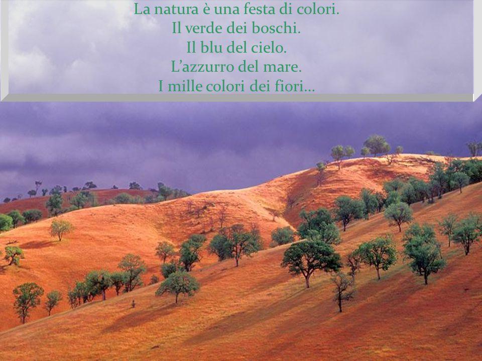 La natura è una festa di colori.Il verde dei boschi.