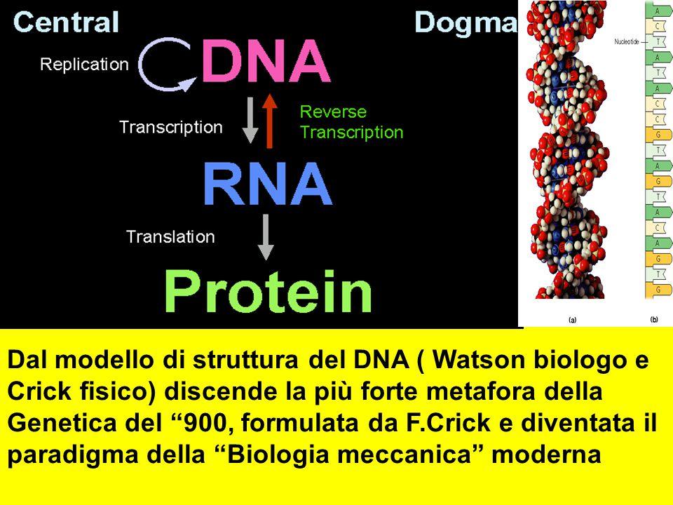 """Dal modello di struttura del DNA ( Watson biologo e Crick fisico) discende la più forte metafora della Genetica del """"900, formulata da F.Crick e diven"""