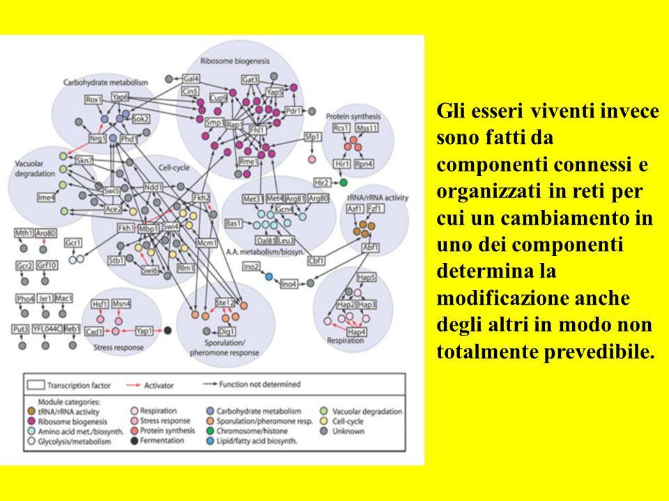 Gli esseri viventi invece sono fatti da componenti connessi e organizzati in reti per cui un cambiamento in uno dei componenti determina la modificazione anche degli altri in modo non totalmente prevedibile.