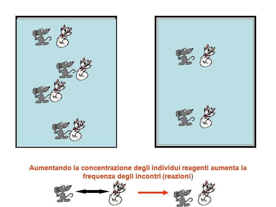 Aumentando la concentrazione degli individui reagenti aumenta la frequenza degli incontri (reazioni)
