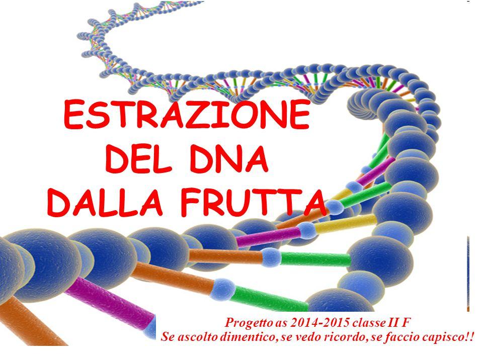 ESTRAZIONE DEL DNA DALLA FRUTTA Progetto as 2014-2015 classe II F Se ascolto dimentico, se vedo ricordo, se faccio capisco!!
