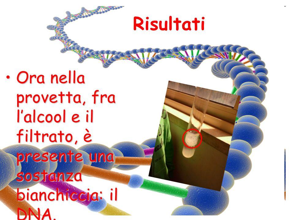 Risultati Ora nella provetta, fra l'alcool e il filtrato, è presente una sostanza bianchiccia: il DNA.Ora nella provetta, fra l'alcool e il filtrato,