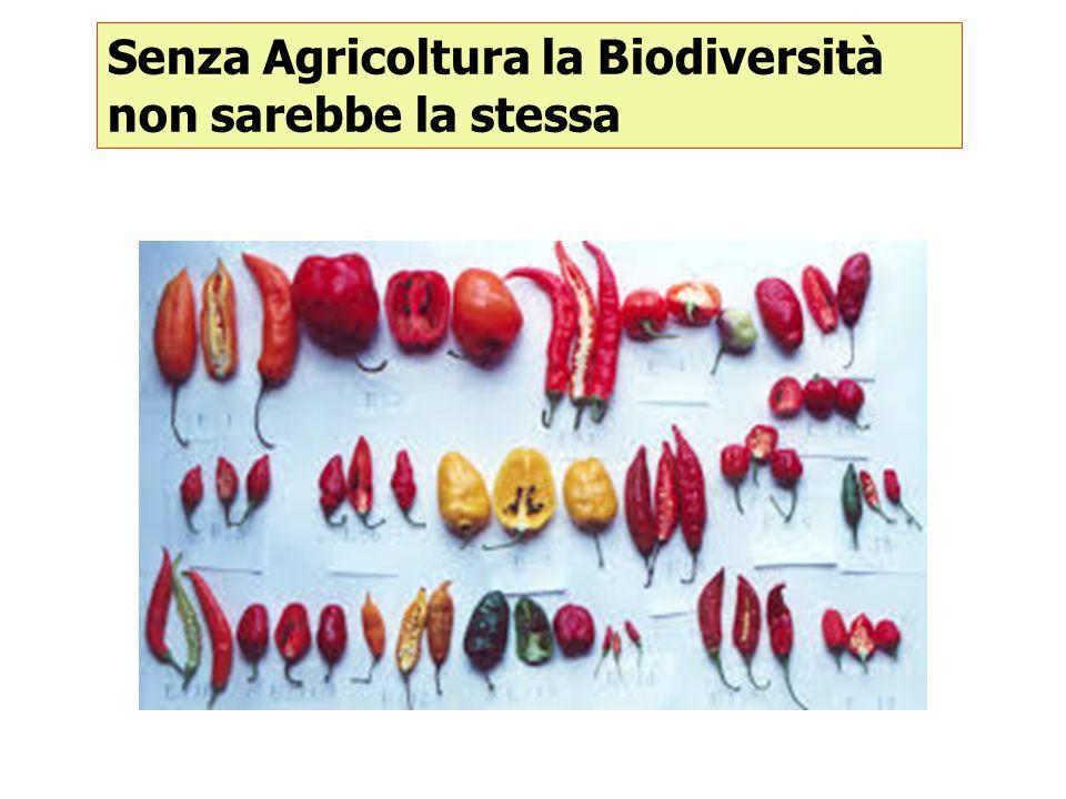 Senza agricoltura il paesaggio rurale non sarebbe lo stesso