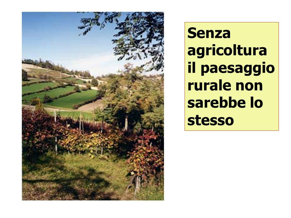Senza agricoltura l'assetto idrogeologico del territorio non sarebbe lo stesso