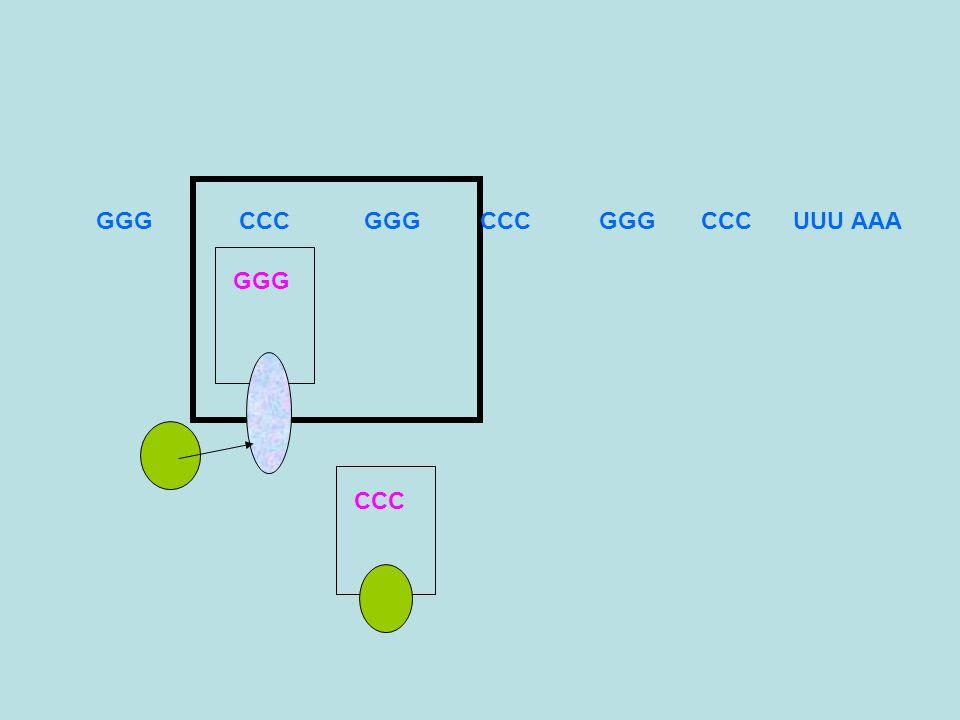 Legame tRNA-amminoacido Ogni tRNA riconosce uno specifico amminoacido al quale legarsi Il legame tra tRNA e amminoacido viene mediato da enzimi specifici che possono riconoscere tRNA e amminoacido da collegare:Amminoacilsintetasi