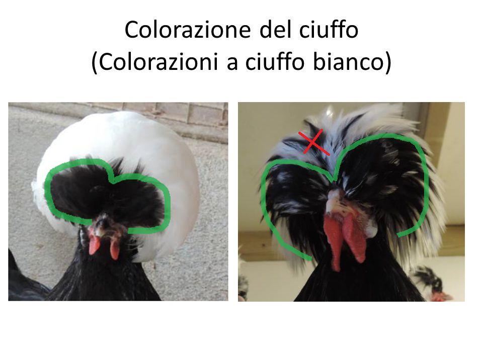 Colorazione del ciuffo (Colorazioni a ciuffo bianco)