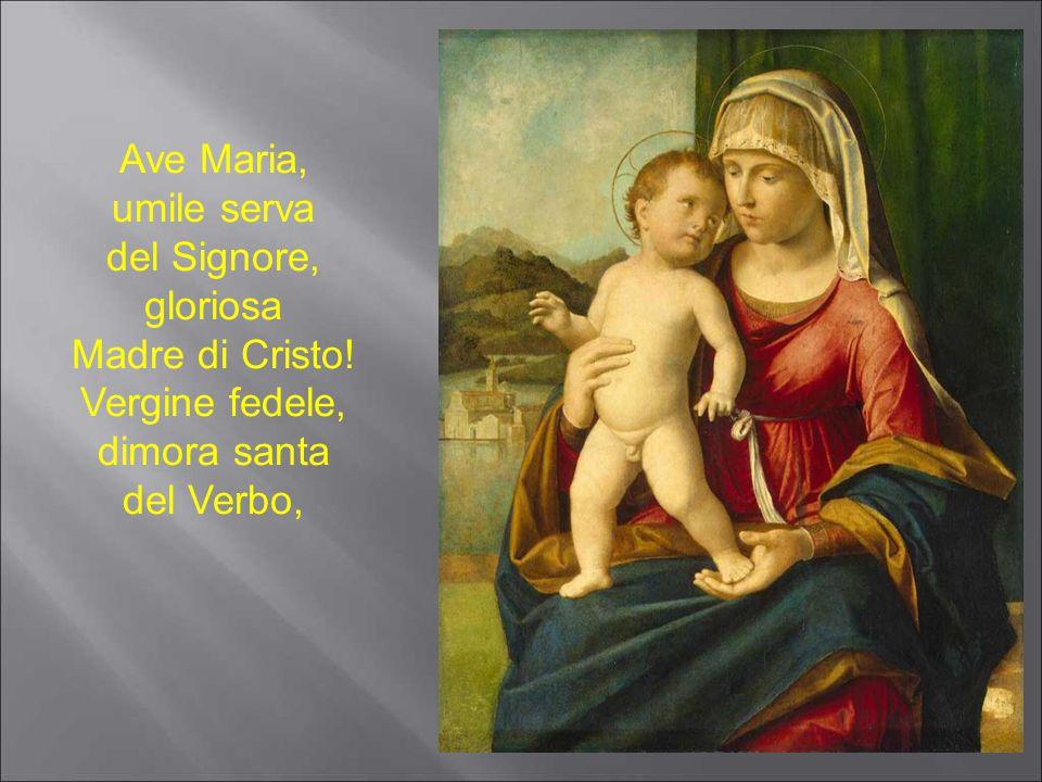 Ave Maria, umile serva del Signore, gloriosa Madre di Cristo! Vergine fedele, dimora santa del Verbo,