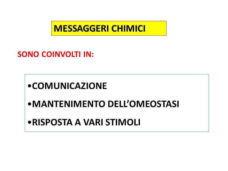 MESSAGGERI CHIMICI COMUNICAZIONE MANTENIMENTO DELL'OMEOSTASI RISPOSTA A VARI STIMOLI SONO COINVOLTI IN: