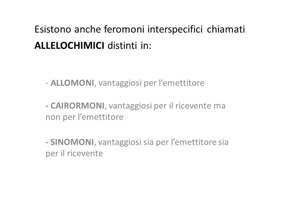 Esistono anche feromoni interspecifici chiamati ALLELOCHIMICI distinti in: - ALLOMONI, vantaggiosi per l'emettitore - CAIRORMONI, vantaggiosi per il r