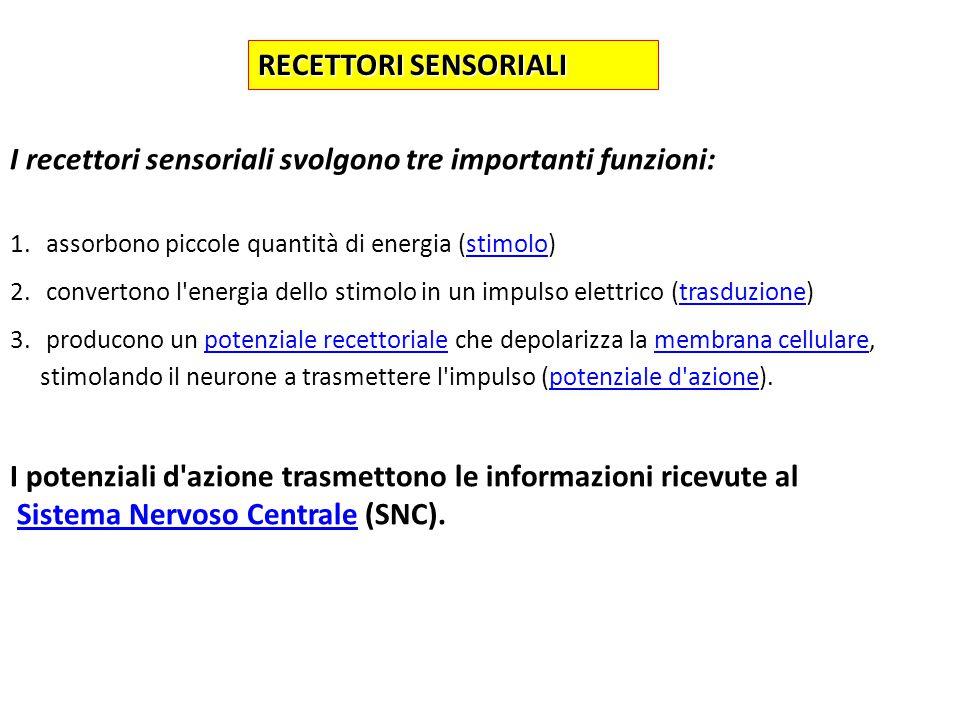 A SECONDA DELLA NATURA DELLO STIMOLO I RECETTORI SENSORIALI SONO CLASSIFICATI IN:MECCANOCETTORI: rispondono alle modificazioni meccaniche rispondono alle modificazioni meccanicheCHEMIOCETTORI: rispondono a stimoli chimici FOTOCETTORI: rispondono a stimoli luminosi
