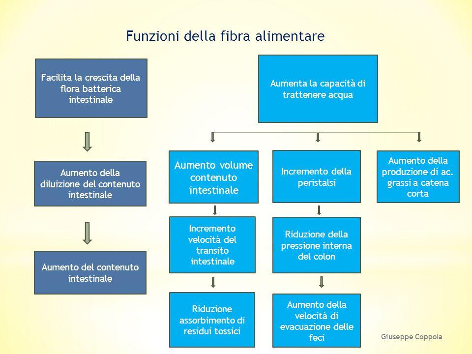 Funzioni della fibra alimentare Aumenta la capacità di trattenere acqua Facilita la crescita della flora batterica intestinale Aumento della diluizion