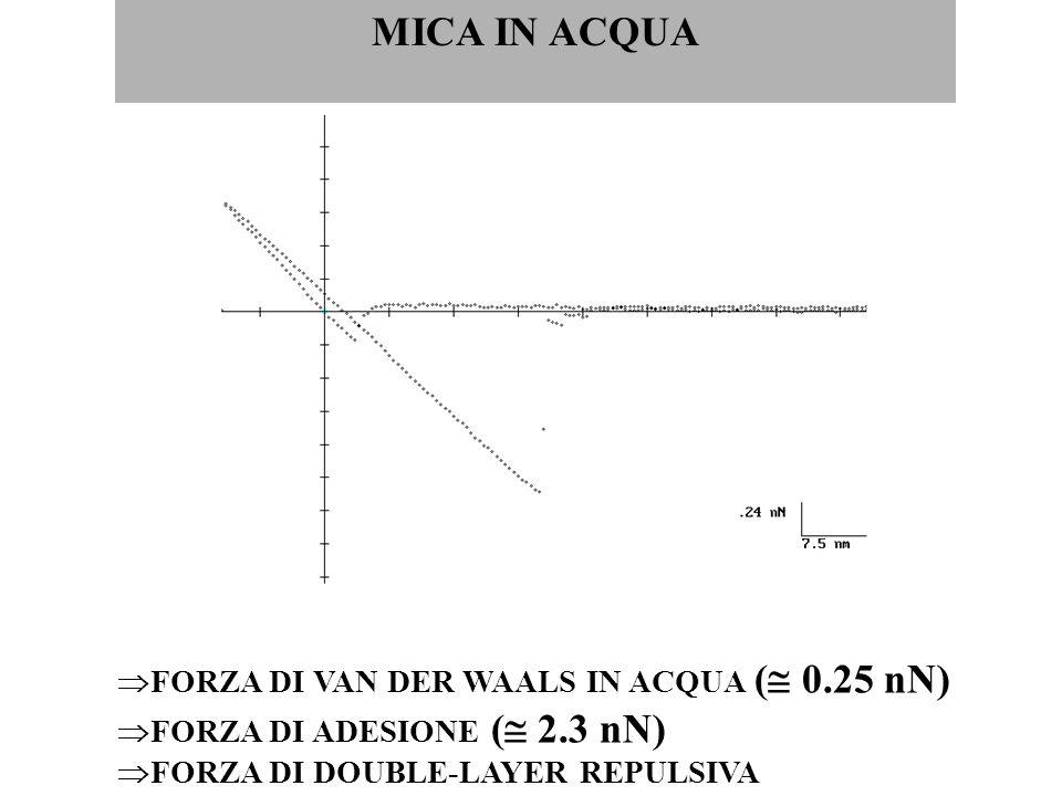 MICA IN ACQUA  FORZA DI VAN DER WAALS IN ACQUA (  0.25 nN)  FORZA DI ADESIONE (  2.3 nN)  FORZA DI DOUBLE-LAYER REPULSIVA