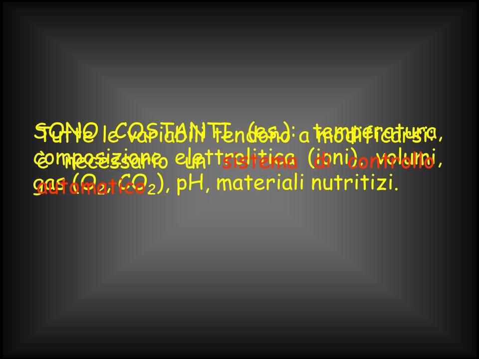 SONO COSTANTI (es.): temperatura, composizione elettrolitica (ioni), volumi, gas (O 2, CO 2 ), pH, materiali nutritizi.