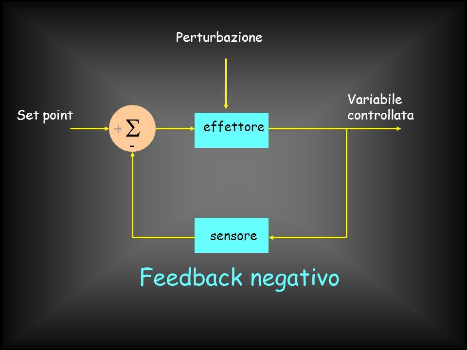 Set point sensore Variabile controllata effettore  + - Perturbazione Feedback negativo