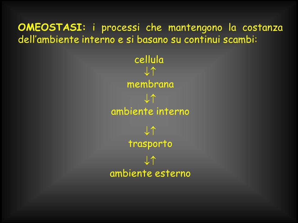 OMEOSTASI: i processi che mantengono la costanza dell'ambiente interno e si basano su continui scambi: cellula  membrana  ambiente interno  trasporto  ambiente esterno