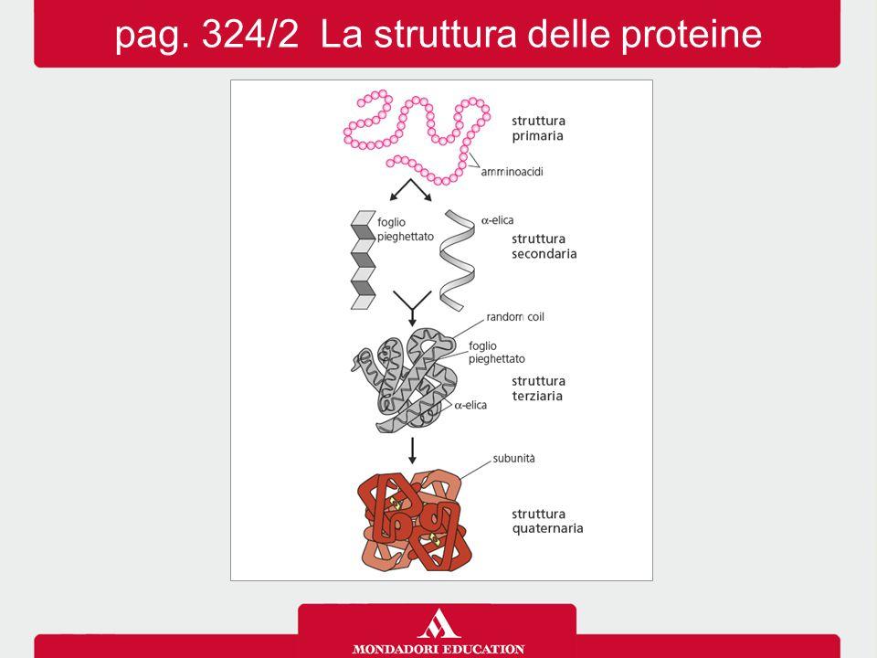 pag. 324/2 La struttura delle proteine