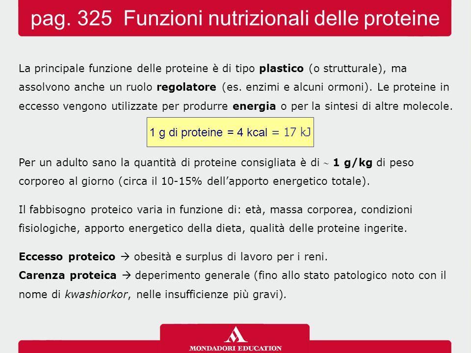La principale funzione delle proteine è di tipo plastico (o strutturale), ma assolvono anche un ruolo regolatore (es. enzimi e alcuni ormoni). Le prot