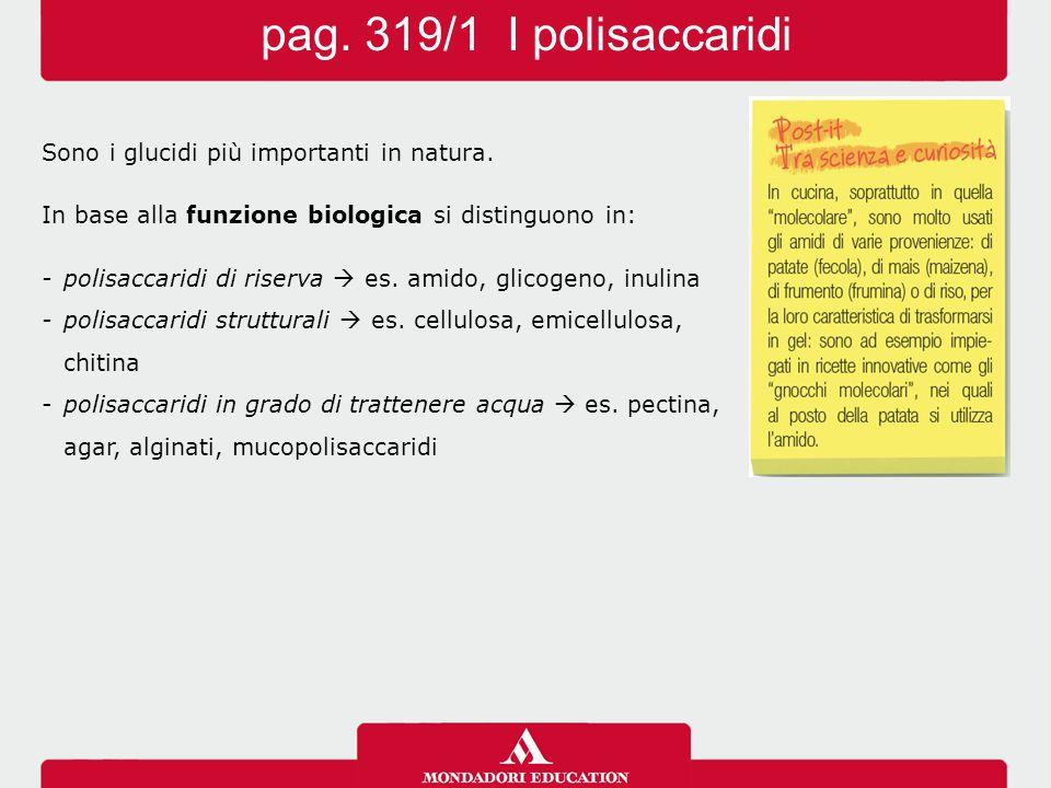 pag. 319/1 I polisaccaridi Sono i glucidi più importanti in natura. In base alla funzione biologica si distinguono in: -polisaccaridi di riserva  es.
