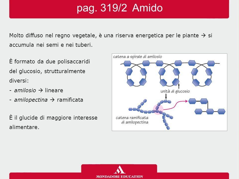 È costituita da migliaia di molecole di glucosio, che formano catene lineari.