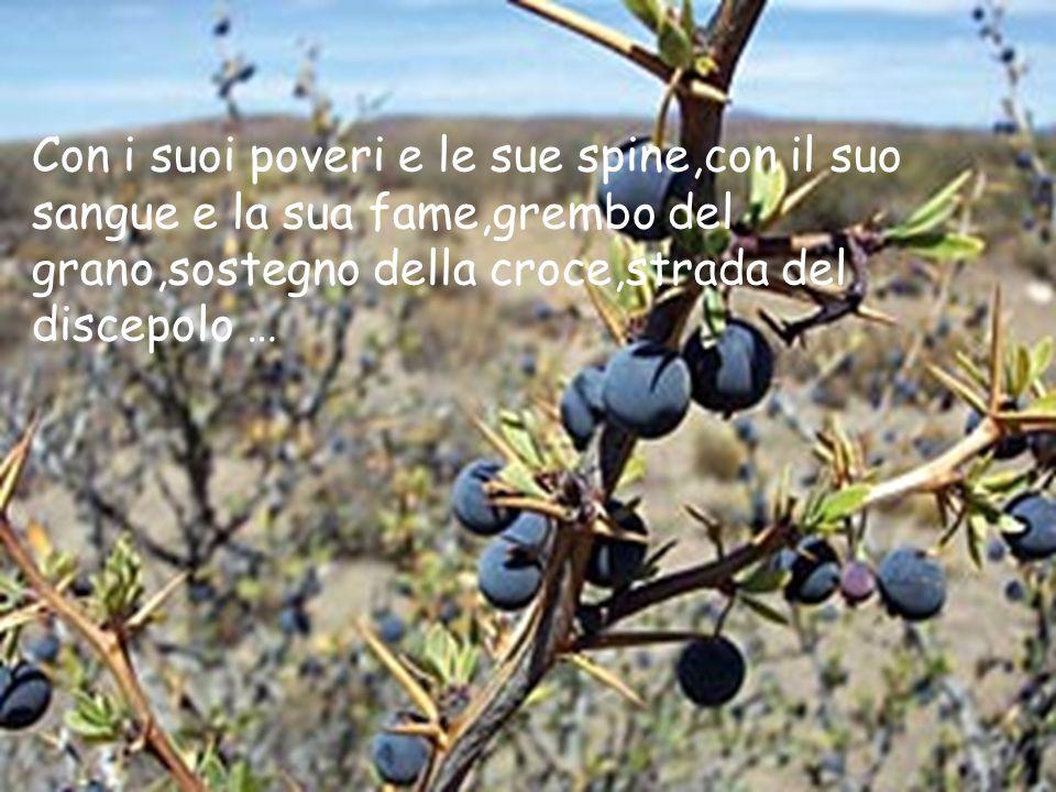 Con i suoi poveri e le sue spine,con il suo sangue e la sua fame,grembo del grano,sostegno della croce,strada del discepolo …