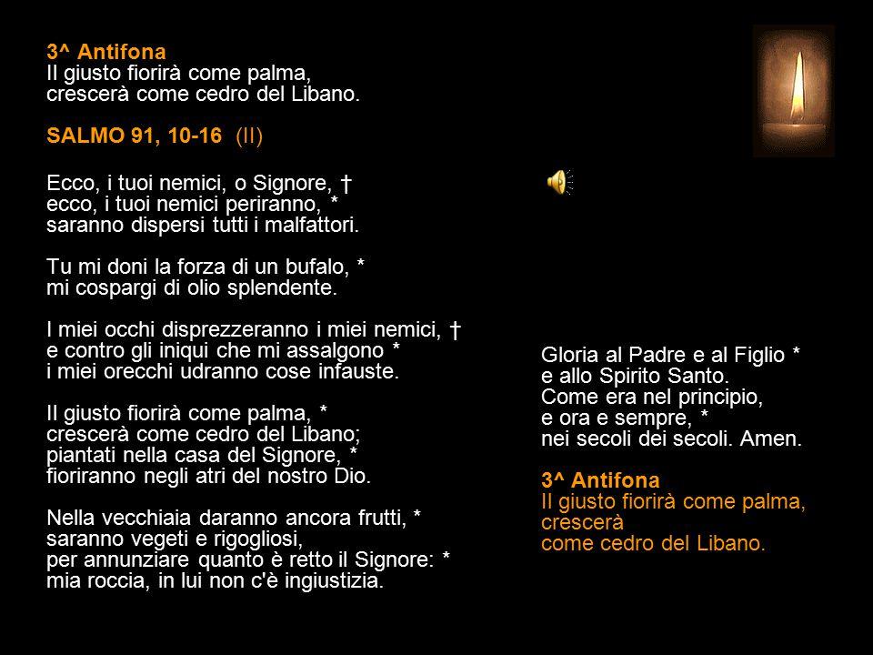 3^ Antifona Il giusto fiorirà come palma, crescerà come cedro del Libano.