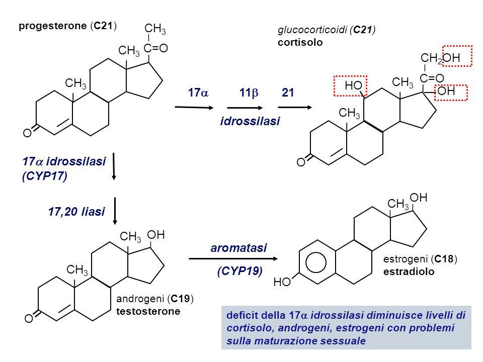 21 11  18 idrossilasi progesterone 11, 18, 21 triidrossiprogesterone aldosterone deidrogenasi Deficit della 21 idrossilasi porta a deficit di cortisolo e aldosterone con sovrapproduzione di testosterone nelle ghiandole surrenali (virilizzazione nelle donne) O = HO CH 3 CHO CH 2 OH C=O I Somministrazione diretta degli ormoni O C=O = HO CH 3 CH 2 OH I O = CH 3 C=O I