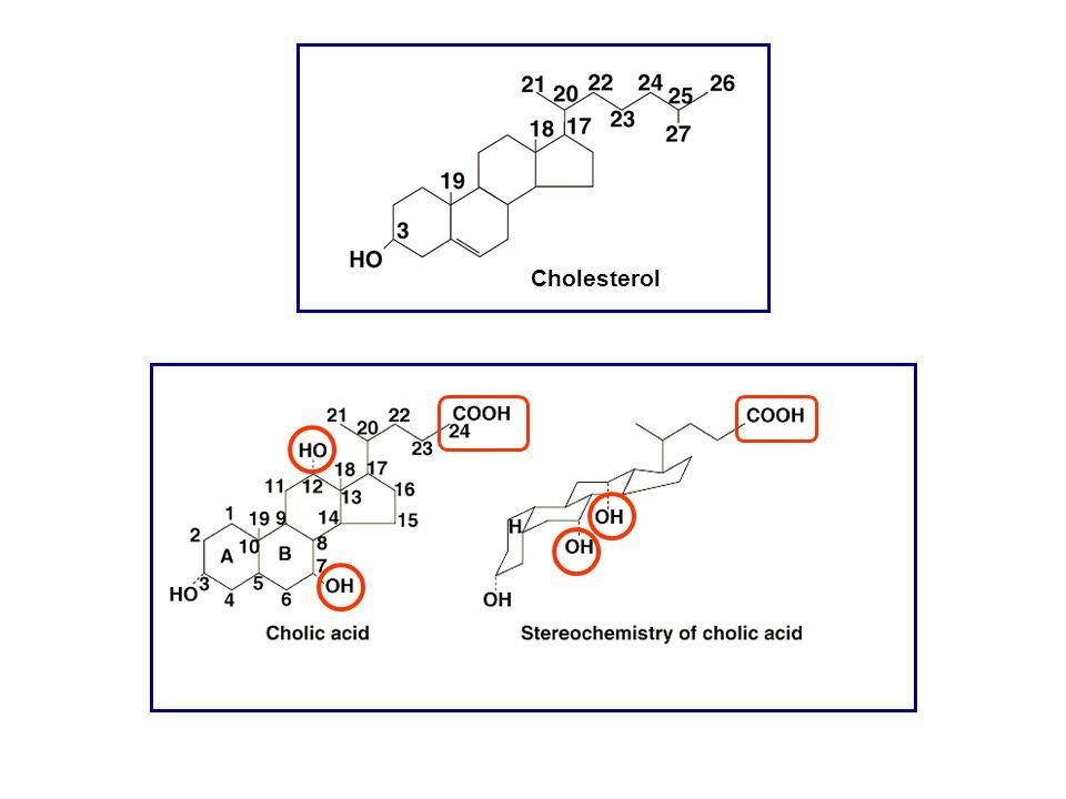 HO OH 37 24 CO-NH-CH 2 -CH 2 SO 3 2- HO OH 37 24OH12 Acido taurochenodesossicolico (45%) Acido taurocolico (30%) HO COO - 3 24 Acido litocolico HO COO - 3 24OH12 Acido desossicolico (24%) formato nell'intestino dal metabolismo batterico formato nell'intestino dal metabolismo batterico ACIDI BILIARI PRIMARI ACIDI BILIARI SECONDARI
