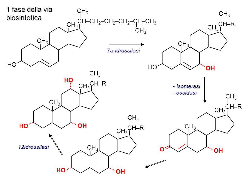 CH–CH 2 –CH 2 –CH 2 –CH–COOH I I I CH 3 CH–CH 2 –CH 2 –CH 2 –CH–CH 2 OH I I I CH 3 I I I CH–CH 2 –CH 2 –CH–CH–COSCoA I OH I I CH 3 CH–CH 2 –CH 2 –COOH CH 3 –CH 2 COSCOA + acido colico propioniCoA 27 idrossilasi + ATP + CoASH I I I CH 3 CH–CH 2 –CH 2 –CH 2 –CH–COSCoA ossidasi 27 idrossilasi 3 HC HO CH 3 CH–CH 2 –CH 2 –CH 2 –CH–CH 3 CH 3 I I I I I OH HO 2 fase