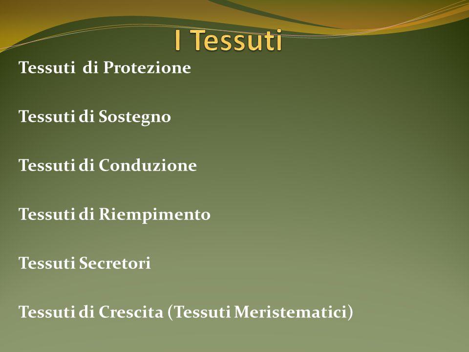 Tessuti di Protezione Tessuti di Sostegno Tessuti di Conduzione Tessuti di Riempimento Tessuti Secretori Tessuti di Crescita (Tessuti Meristematici)