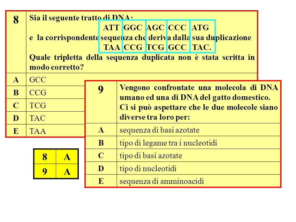 8 Sia il seguente tratto di DNA: ATT GGC AGC CCC ATG e la corrispondente sequenza che deriva dalla sua duplicazione TAA CCG TCG GCC TAC.