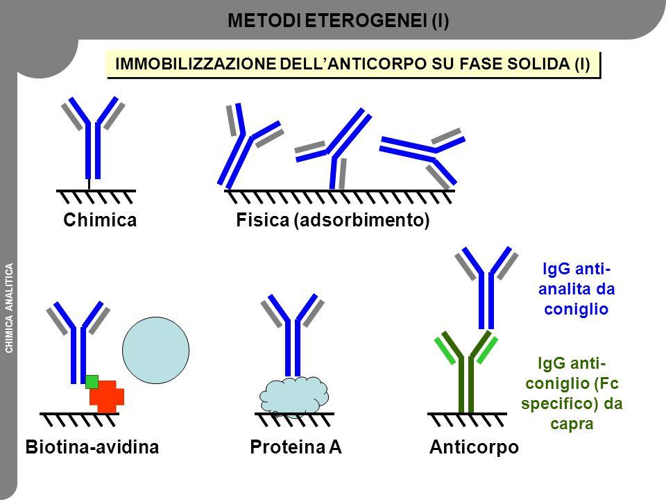 CHIMICA ANALITICA IMMOBILIZZAZIONE DELL'ANTICORPO SU FASE SOLIDA (I) Fisica (adsorbimento)Chimica Biotina-avidinaProteina AAnticorpo IgG anti- conigli