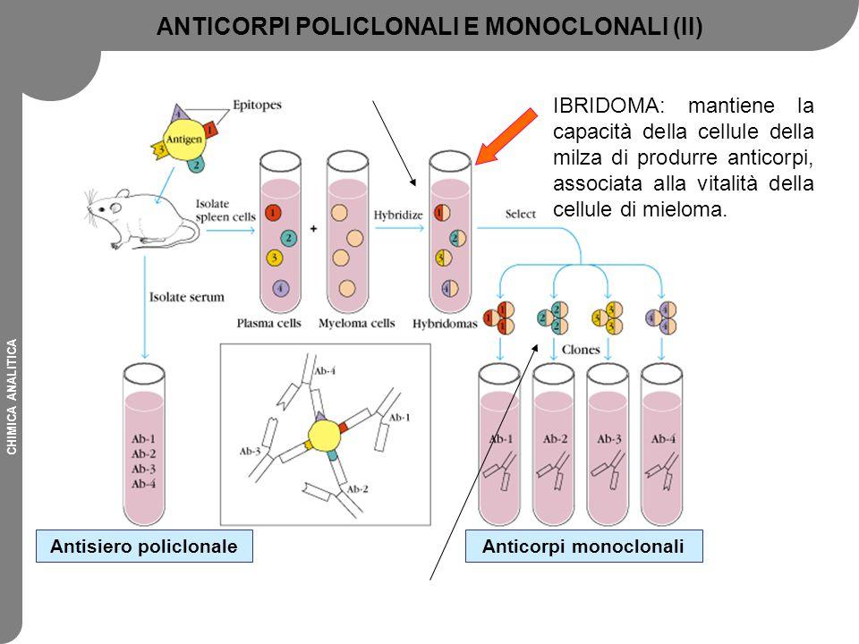 CHIMICA ANALITICA CARATTERISTICHE DEGLI ANTICORPI MONOCLONALI VantaggiSvantaggi Caratteriestiche (affinità e specificità) note e costanti Potrebbero essere troppo specifici: (difficoltà nel legare forme diverse dell'antigene) Sono sufficienti piccole quantità di antigene, anche impuro, per la loro produzione Tecniche di produzione più sofisticate E' possibile selezionare l'anticorpo con la specificità desiderata Non sempre reagiscono con la proteina A Può essere prodotto in quantità illimitata ed è semplice da purificare Non formano precipitato in seguito al legame con l'antigene Solitamente caratterizzati da elevata specificità Spesso caratterizzati da bassa affinità