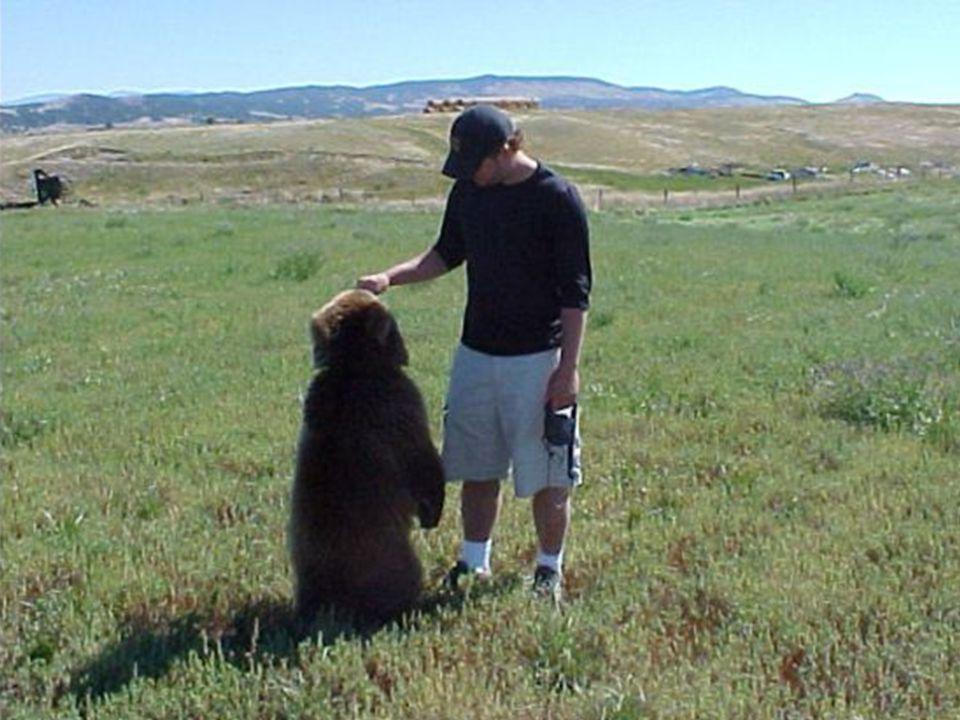 (Isaia 11:7-9)...E la vacca e l'orso stessi pasceranno; i loro piccoli giaceranno insieme.