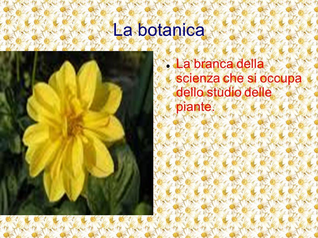 Molte piante Le piante sono esseri viventi, comprendono circa 35.000 specie come: Alberi,arbusti,cespugli, erbe,piante rampicanti, Piante succulente(piante grasse), felci,muschi.