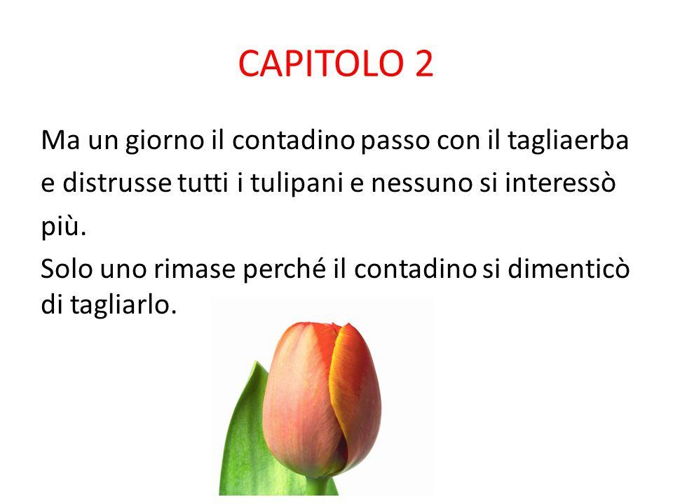 CAPITOLO 1 C'era una volta un bellissimo campo di tulipani di diversi colori (gialli,verdi,blu,viola,rossi ). I tulipani vivevano molto bene insieme,