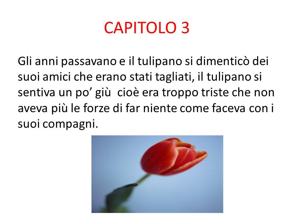 CAPITOLO 3 Gli anni passavano e il tulipano si dimenticò dei suoi amici che erano stati tagliati, il tulipano si sentiva un po' giù cioè era troppo triste che non aveva più le forze di far niente come faceva con i suoi compagni.