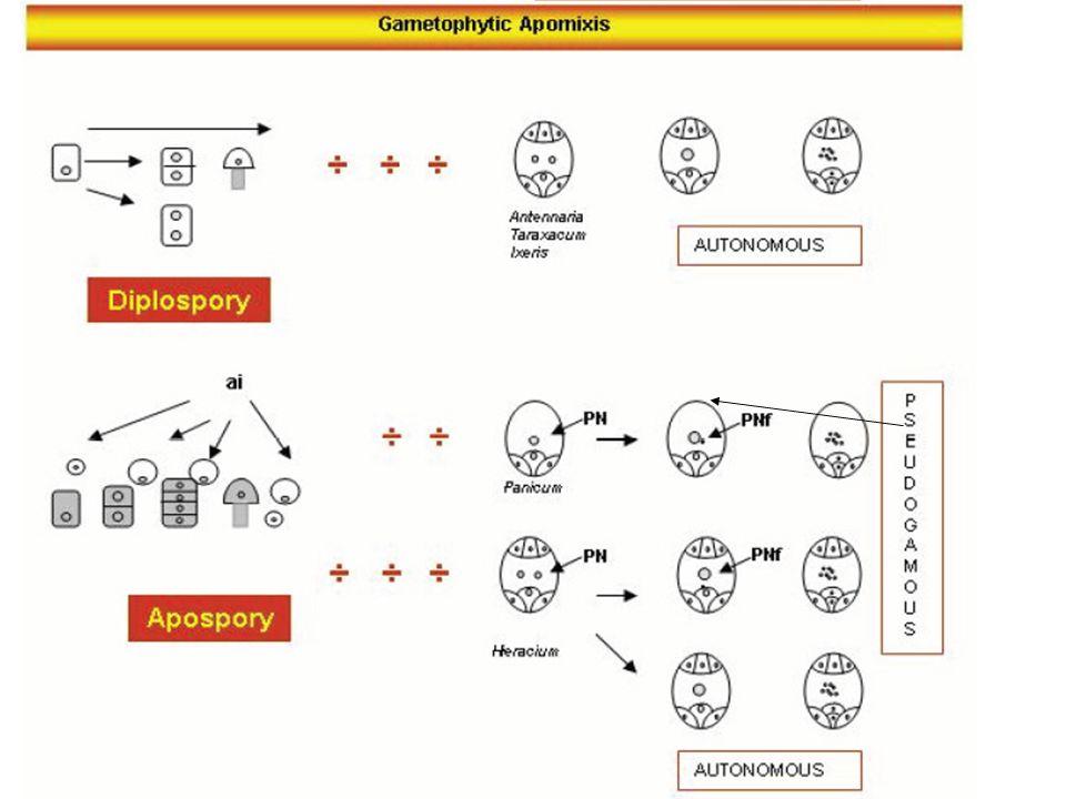 Apomissia: riproduzione asessuata con formazione di semi Embrionia avventizia: una sottocategoria dell'apomissia in cui l'embrione si differenzia direttamente da una cellula somatica senza formazione di un megagametofito.